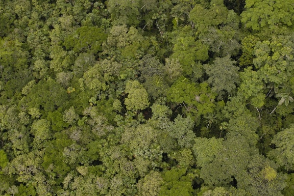 Am19 Aerial View Of Rainforest