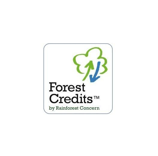 Forest Credits With Email Bigcanvas
