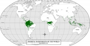 World Rainforest Map