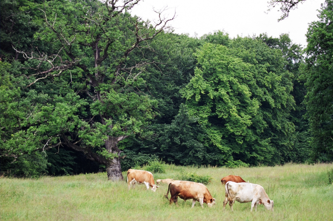 Wood pasture, as found in the area, are another threatened habitat in Europe
