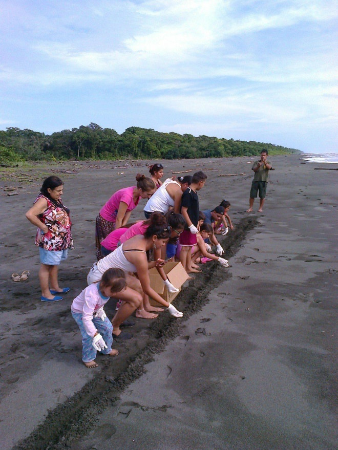 Members of the local community releasing baby turtles