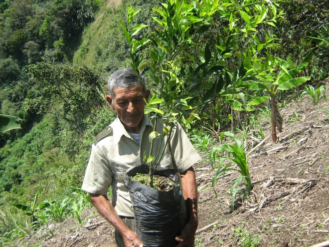 Receiving citric trees to plant