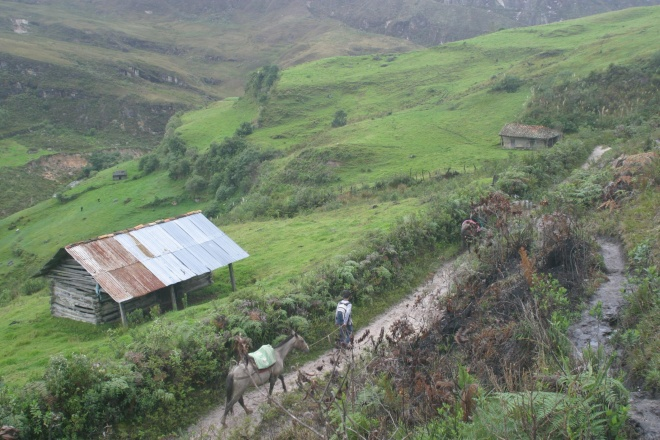 Cloudforest community above the Marañón valley (photo OW)