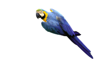 Blue Yellow Macaw Kids Cutout