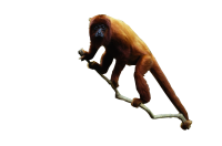 Red Howler Monkey Kids Cut Out
